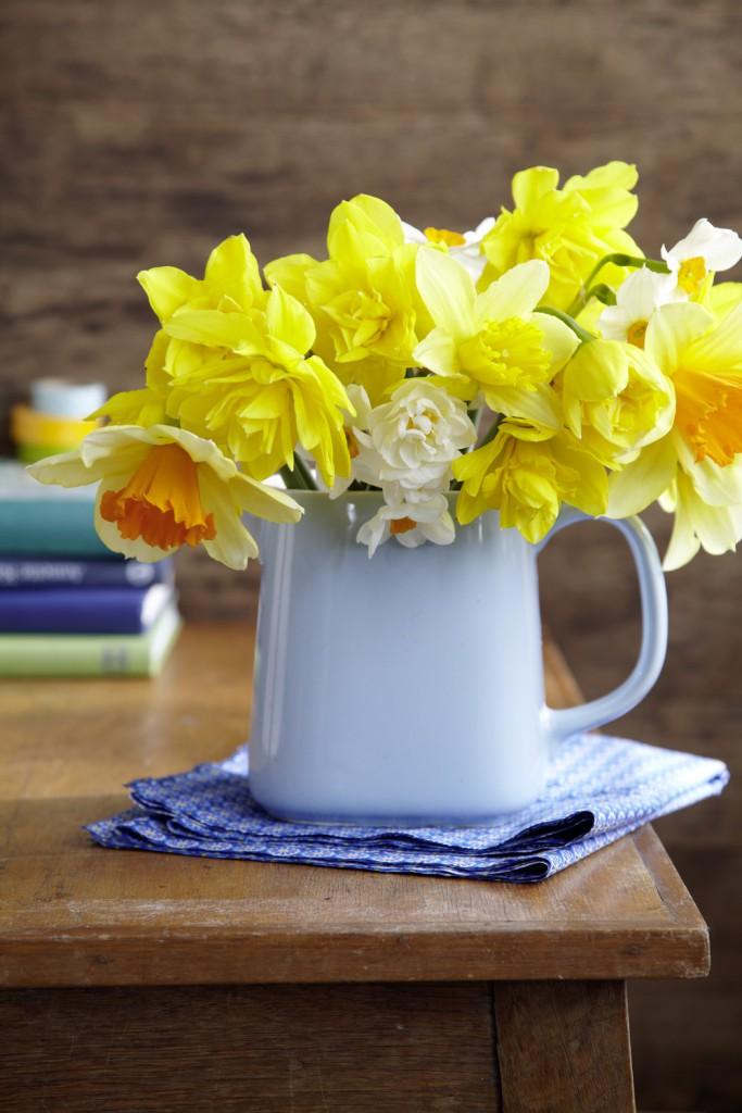 Narzissen sind die absoluten Gute-Laune-Blumen. Gelb, weiß, orange, gefüllt oder einfach – Ihre Sortenvielfalt ist so überwältigend wie ihre Schönheit. Wer braucht da noch Begleiter?