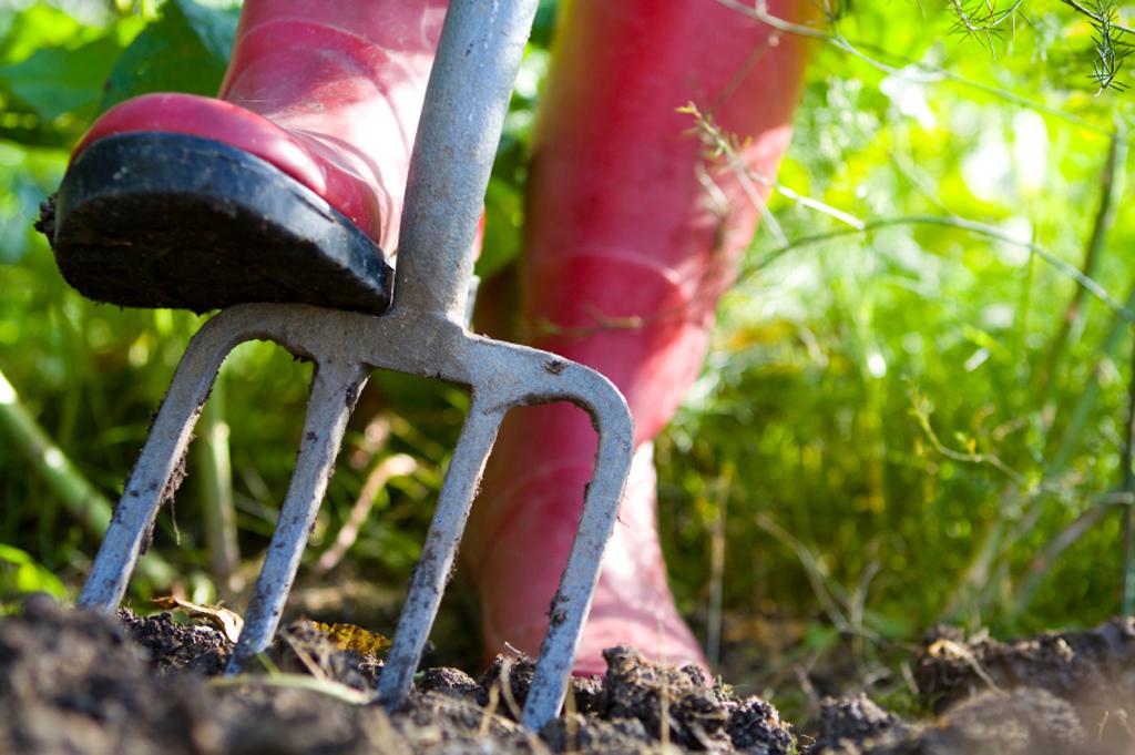 Für große, freie Flächen wie im Gemüsegarten wird der Boden mit der Grabegabel Stück für Stück und Reihe für Reihe schonend gelockert und gelüftet, ohne die Bodenschichten durcheinander zu bringen. In eng bepflanzten Staudenbeeten, nimmt man besser den Grubber zur Hand.